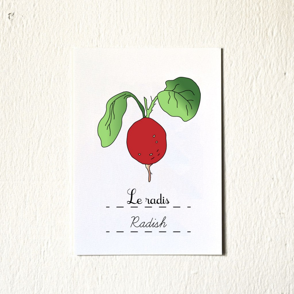Kitchen Art Print Radish 5x7 illustration