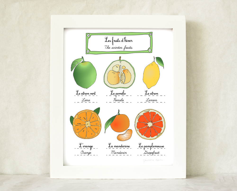The winter fruits - citrus 8x10 Fine Art Print Illustration